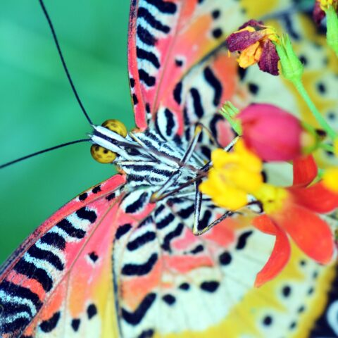 gorgeous multicolored butterfly a symbol of transformation