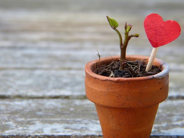 flowerpot heart