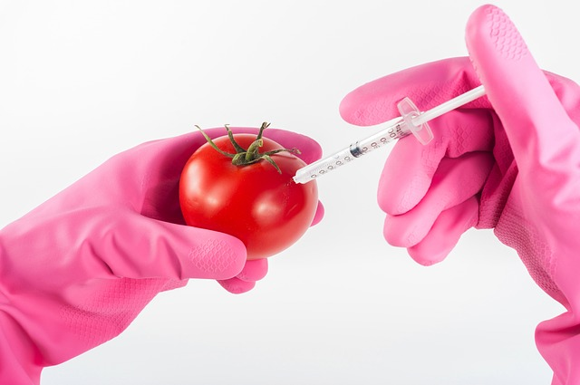 GMO WTF